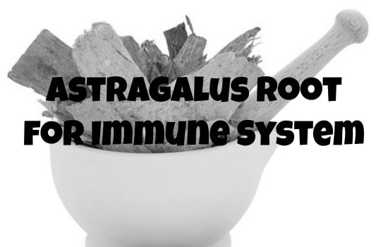 Build Up Your Immune System with Astragalus Root